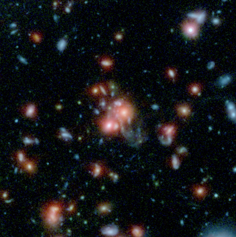 """A massive cluster of galaxies, called SpARCS1049+56, can be seen in this multi-wavelength view from NASA's Hubble and Spitzer space telescopes. At the middle of the picture is the largest, central member of the family of galaxies (upper right red dot of central pair). Unlike other central galaxies in clusters, this one is bursting with the birth of new stars. Scientists say this star birth was triggered by a collision between a smaller galaxy and the giant, central galaxy. The smaller galaxy's wispy, shredded parts, called a tidal tail, can be seen coming out below the larger galaxy. Throughout this region are features called """"beads on a string,"""" which are areas where gas has clumped to form new stars. This type of """"feeding"""" mechanism for galaxy clusters — where gas from the merging of galaxies is converted to new stars — is rare. The Hubble data in this image show infrared light with a wavelength of 1 micron in blue, and 1.6 microns in green. The Spitzer data show infrared light of 3.6 microns in red. Image credit: NASA/STSCI/ESA/JPL-Caltech/McGill University."""