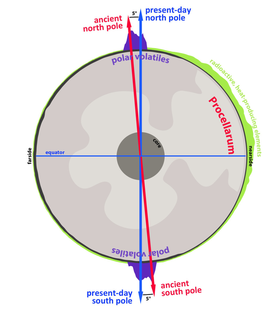 A cross-section through the Moon, highlighting the antipodal nature of lunar polar volatiles (in purple), and how they trace an ancient spin pole. The reorientation from that ancient spin pole (red arrow) to the present-day spin pole (blue arrow) was driven by the formation and evolution of the Procellarum — a region on the nearside of the Moon associated with a high abundance of radiogenic heat producing elements (green), high heat flow, and ancient volcanic activity. Illustration credits: James Tuttle Keane, University of Arizona.