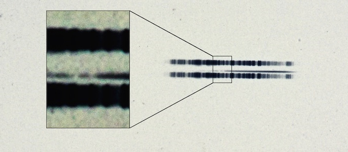 """The 1917 photographic plate spectrum of van Maanen's star from the Carnegie Observatories' archive. The pull-out box shows the strong lines of the element calcium, which are surprisingly easy to see in the century old spectrum. The spectrum is the thin, (mostly) dark line in the centre of the image. The broad dark lanes above and below are from lamps used to calibrate wavelength, and are contrast-enhanced in the box to highlight the two """"missing"""" absorption bands in the star. Image credit: Carnegie Institution for Science."""