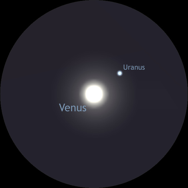 This is a simulated telescopic view of Venus and Uranus at 100x magnification around 7 pm on 4th March. Under average skies, Uranus may be a challenge to glimpse just 0.1° away from the dazzle of Venus — much depends on the quality of your optics, too. The orientation of Uranus with respect to Venus assumes a Newtonian telescope with an inverted view on an alt-azimuth mount; on an equatorial mount, Uranus will lie above Venus in such a telescope. In refractors, Schmidt-Cassegrain or Maksutov telescopes with a star diagonal, Uranus will lie below Venus. AN graphic by Ade Ashford