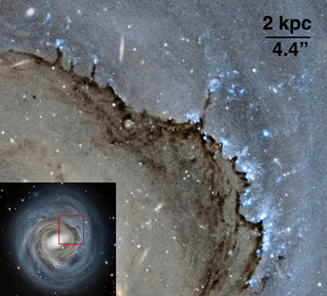 The leading side of NGC 4921's disc shows the effects of strong ram pressure. Image credit: NASA, ESA, and Roberto Colombari.