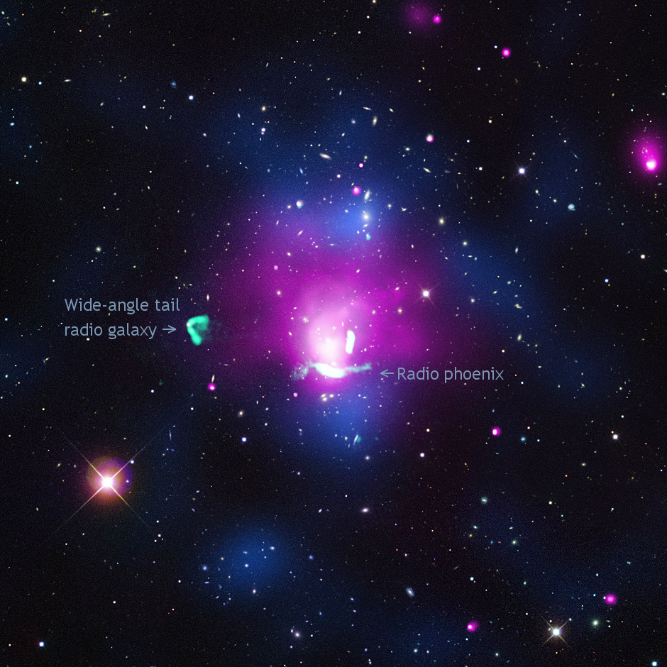 A new portrait of the radio phoenix is captured in the multi-wavelength composite image of Abell1033 above. X-rays from Chandra are in pink, and radio data from the VLA are coloured green. The background image shows optical observations from the SDSS. A map of the density of galaxies, made from the analysis of optical data, is seen in blue. Image credits: X-ray: NASA/CXC/Univ of Hamburg/F. de Gasperin et al; Optical: SDSS; Radio: NRAO/VLA.
