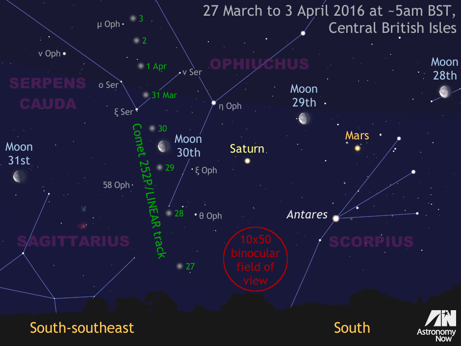 This graphic shows the daily motion of comet 252P/LINEAR over the coming week when it is expected to be at its brightest and best placed for observation from the British Isles around 5amBST. The comet's diffuse round coma is about 40 arcminutes in diameter and currently has an integrated magnitude of around +5.5, so it would be a naked-eye object from dark sky sites if it did not have to contend with the glare of a nearby waning gibbous Moon. For scale, the view is about 40 degrees wide, or twice the span of an outstretched hand at arm's length. The Moon is enlarged for clarity. Click the graphic for a greyscale version suitable for printing. AN graphic by Ade Ashford.