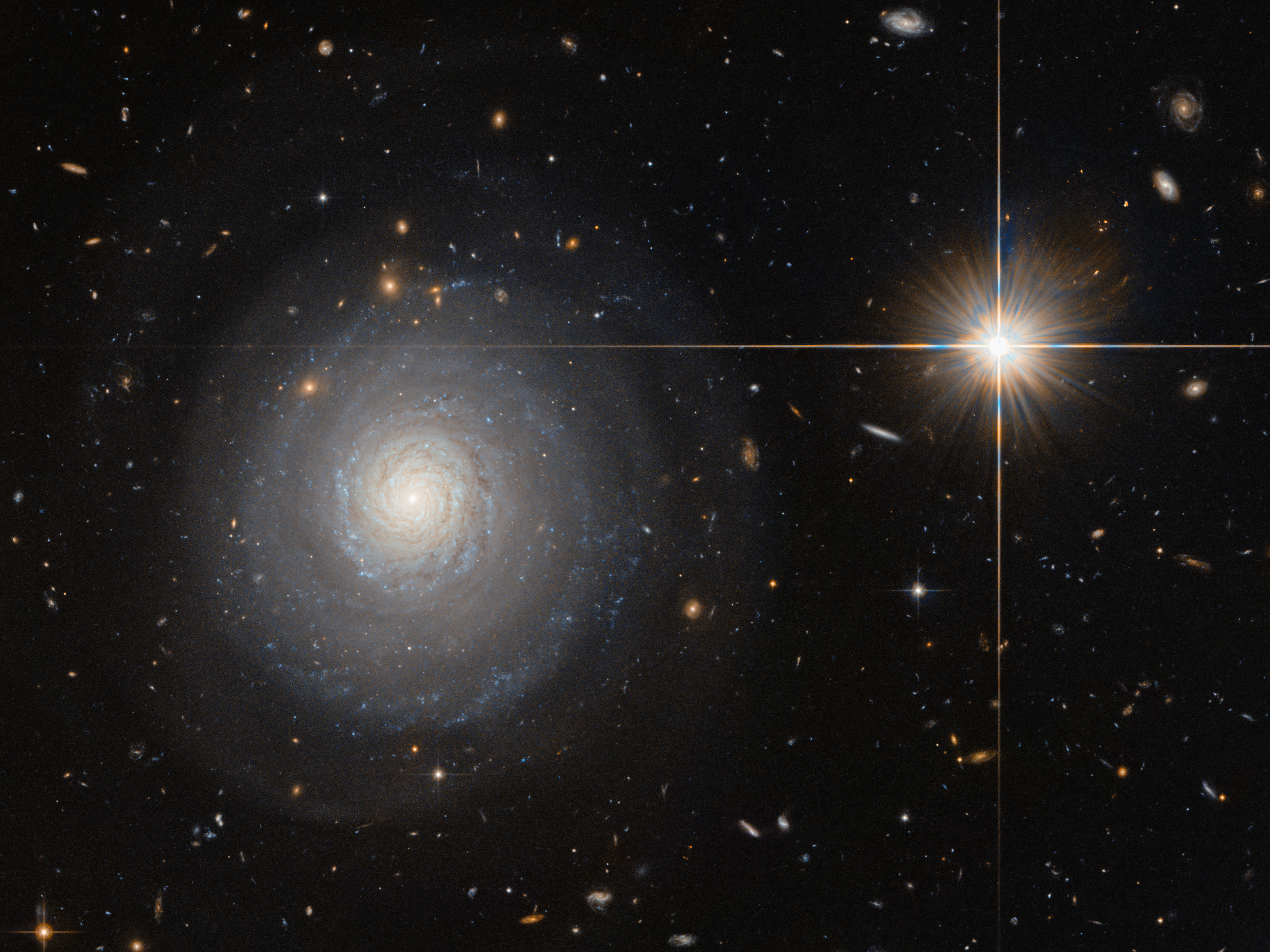 Face-on starburst spiral galaxy MCG+07-33-027 lies 300 million light-years from Earth in the constellation of Hercules. Click the image for a full-size version. Image credit: ESA/Hubble & NASA and N. Grogin (STScI).